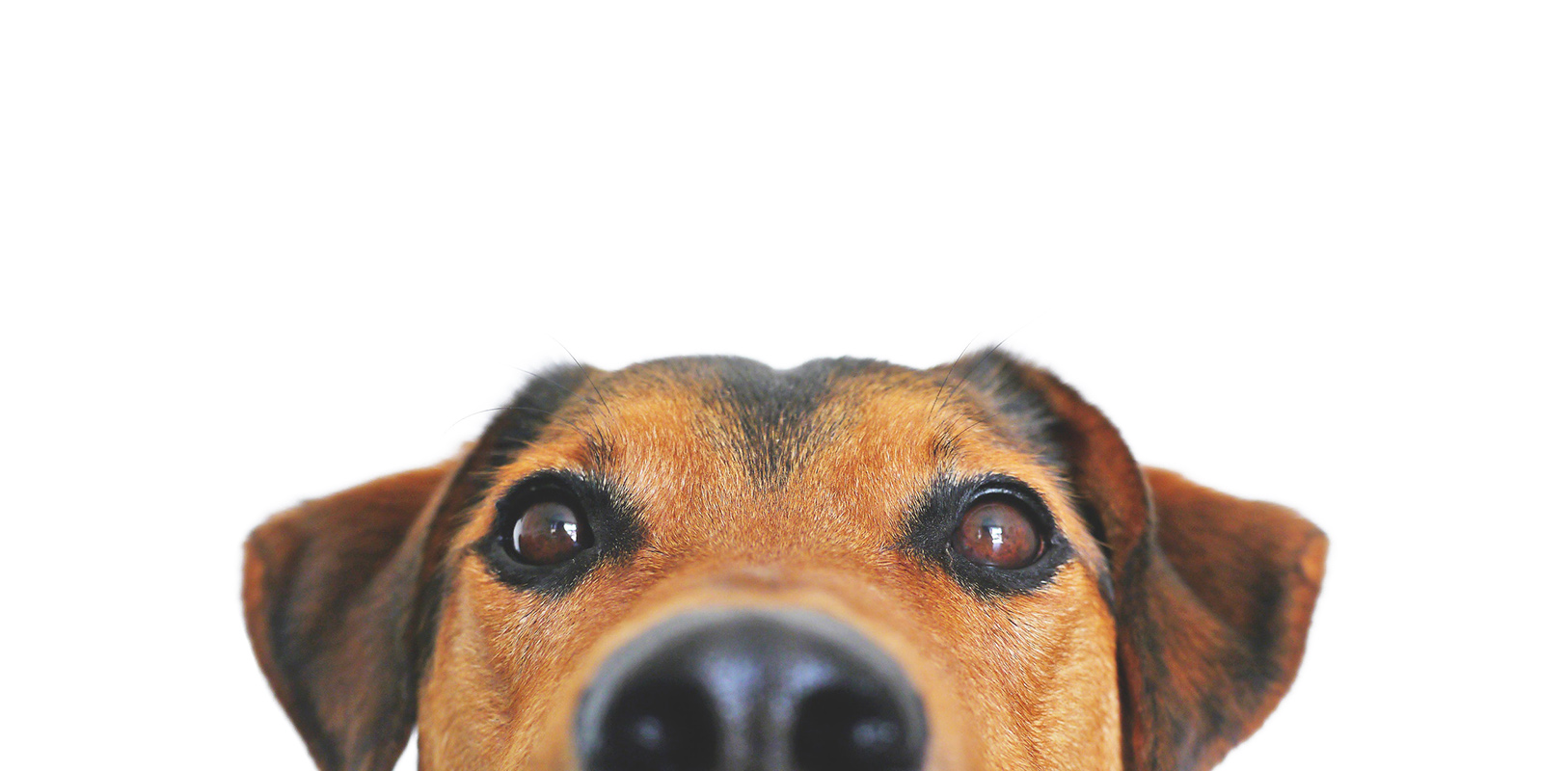 Funny Dog Looking At You